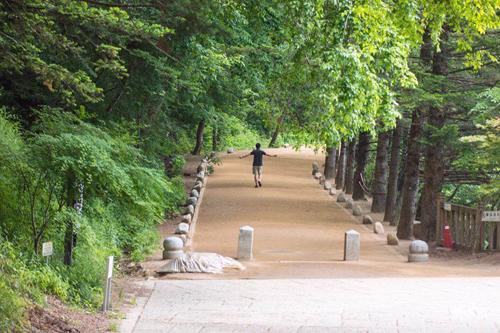 Rừng nằm trong khuôn viên trước cổng chùa Woljeongsa.
