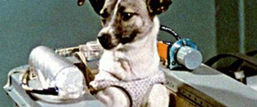 Tượng đài Laika - con chó đầu tiên bay vào vũ trụ
