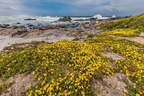 flowering-dunes-south-africa_1375687879.