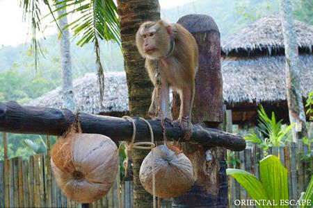 Lạ & Cười - Đảo Dừa, điểm đến lạ của xứ Chùa vàng (Hình 2).