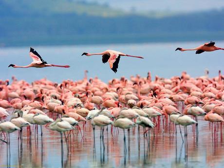 flamingos-lake-nakuru-kenya-1376478947_5