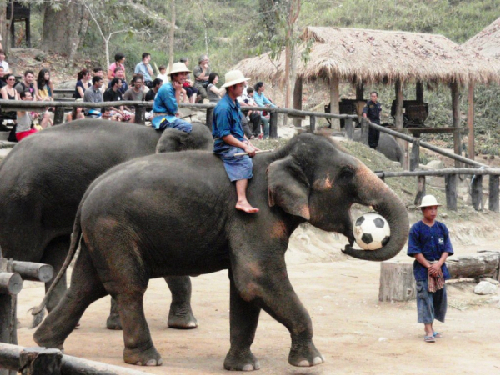 6-ride-an-elephant-1378178168.jpg