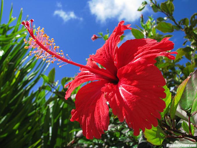 Quốc hoa của 10 nước Đông Nam Á