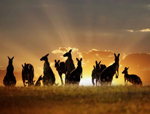 AustraliaDay1.jpg