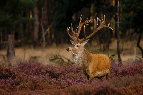 1-Hoge-Veluwe-National-Park-8044-1381825