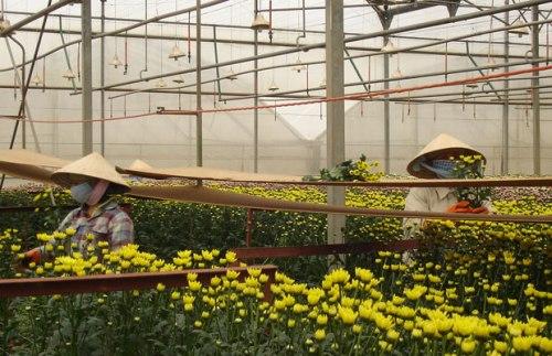 Ha-Dong-bao-Lam-Dong-2067-1386302781.jpg