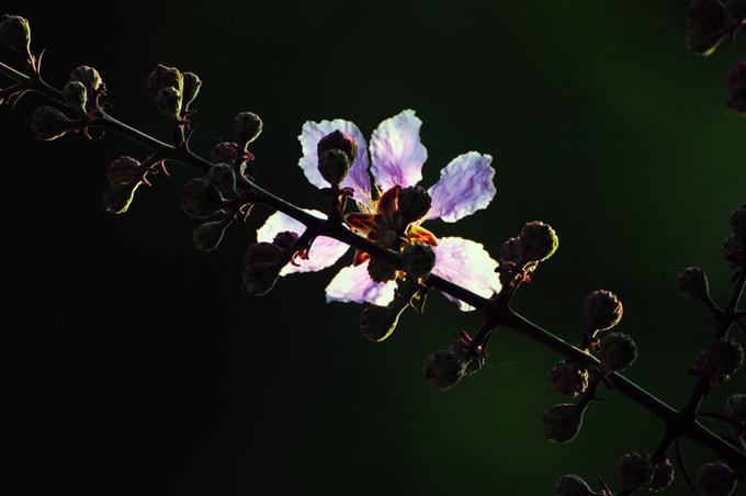 Mười hai tháng, mười hai mùa hoa Hà Nội