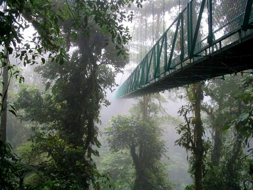 Cloud-Forest-travelmuse-1628-1389425540.