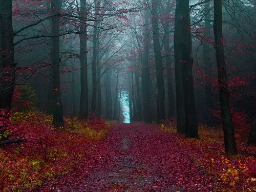 The-Black-Forest-Germany-7667-1389425539