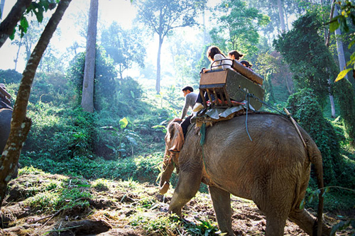 Chiang-Mai-Elephant-Riding-Exi-6571-6078