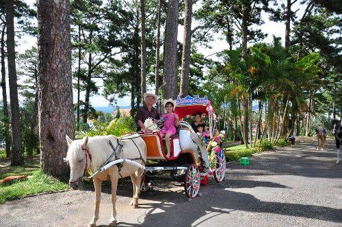Năm con ngựa cưỡi ngựa du lịch ở Đà Lạt
