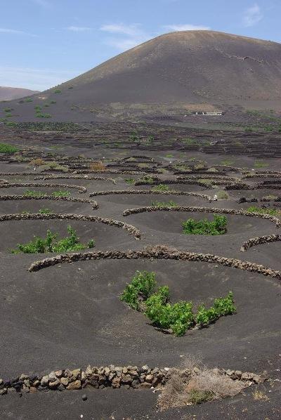 H2-Volcanic-Vine-yards-9817-1390621873.j