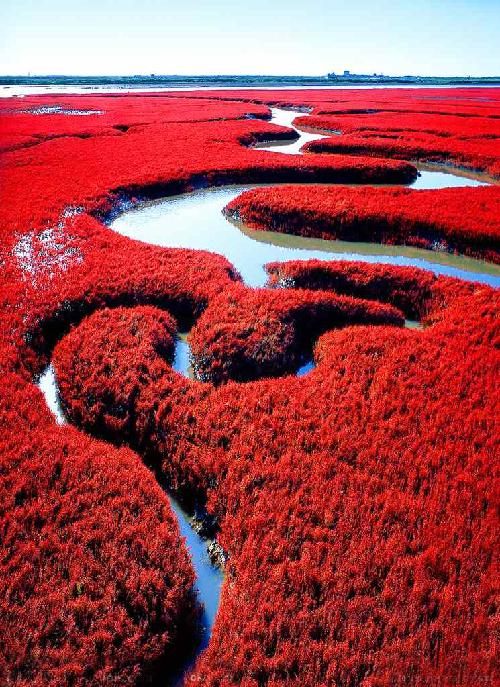 panjin-red-beach-5-1_1392432706_13924327