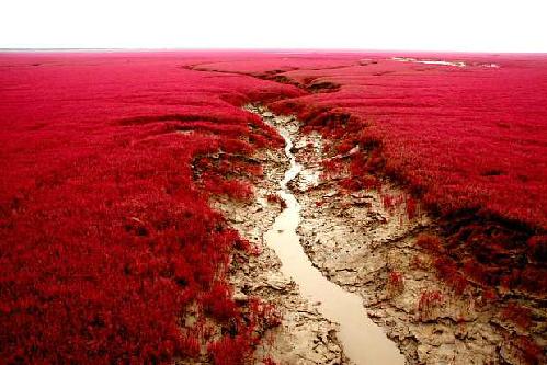 red-beach-china-05_1392432730_1392432749