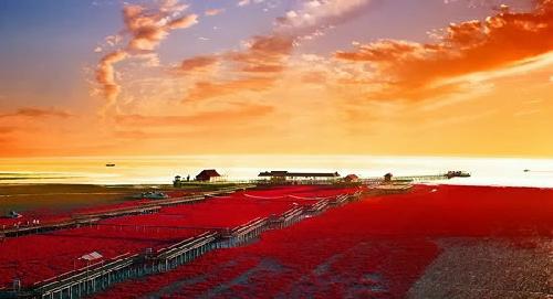 red-beach-panjin-china_1392432498.jpg