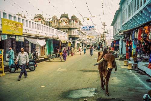 india-cow-3651-1392630483.jpg