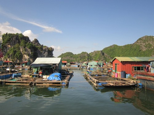 lang-chai-Cai-beo-monkeyisland-8965-3281