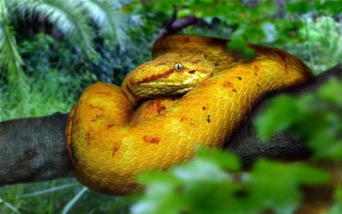 Đảo rắn Brazil - nơi kinh hoàng nhất thế giới-2
