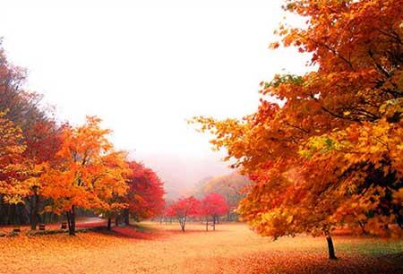 Mùa thu ở Hàn Quốc.