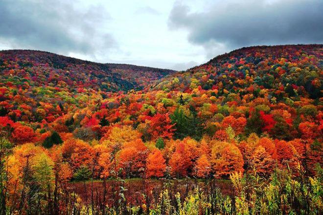 Mùa thu vàng tuyệt đẹp khắp nước Mỹ