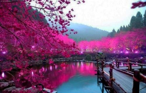 japan-1423-1411642295.jpg