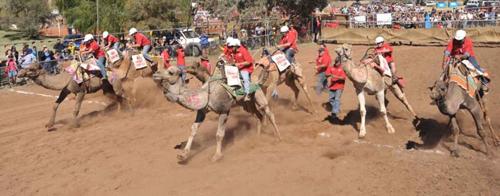 camel-cup-9517-1414404600.jpg