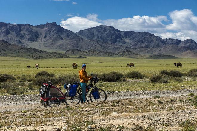 mongolia howd przyczepka wielblady 880 1414557954 660x0 Chú chó lai sói chinh phục Mông Cổ