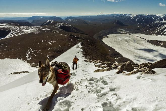 mongolia tavanbogd malchin peak diuna agi1 880 1414557955 660x0 Chú chó lai sói chinh phục Mông Cổ