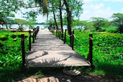 hinh 1 6636 1415008973 Vẻ đẹp hoang sơ của Cồn Ấu trên sông Hậu