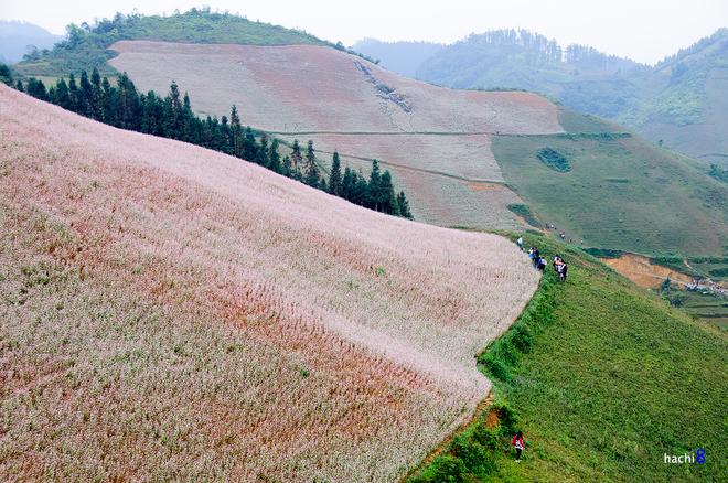 1 1415155375 660x0 Sắc hồng quyến rũ trên những đồi tam giác mạch Si Ma Cai