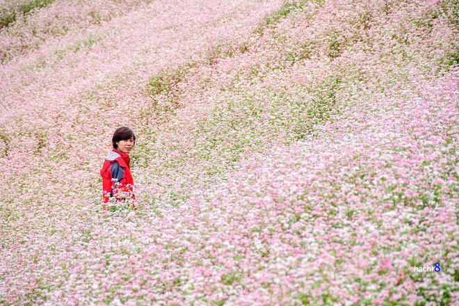 10 1415155405 660x0 Sắc hồng quyến rũ trên những đồi tam giác mạch Si Ma Cai