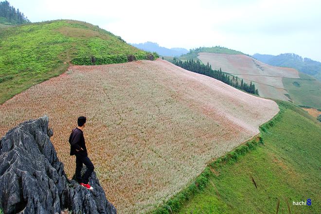 4 1415155385 660x0 Sắc hồng quyến rũ trên những đồi tam giác mạch Si Ma Cai