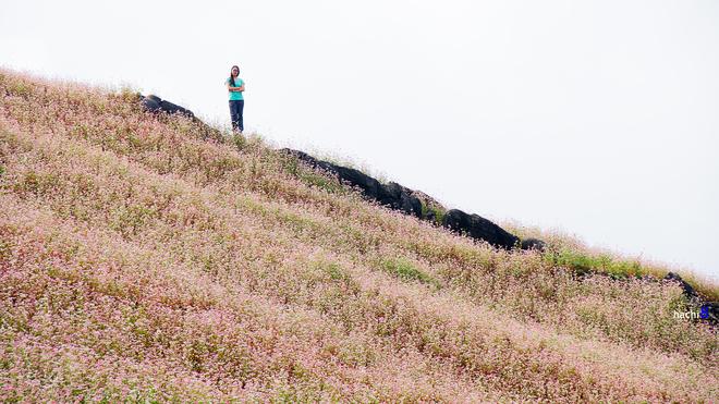 5 1415155389 660x0 Sắc hồng quyến rũ trên những đồi tam giác mạch Si Ma Cai
