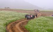 Hoa cải trắng tinh khôi trong tiết giao mùa ở Mộc Châu