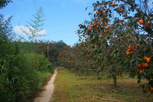 vuonhong2-2008-1416295204.jpg