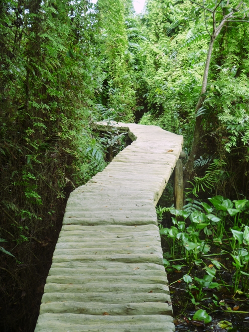 Gợi ý điểm du lịch sinh thái cuối tuần ở Đồng Tháp