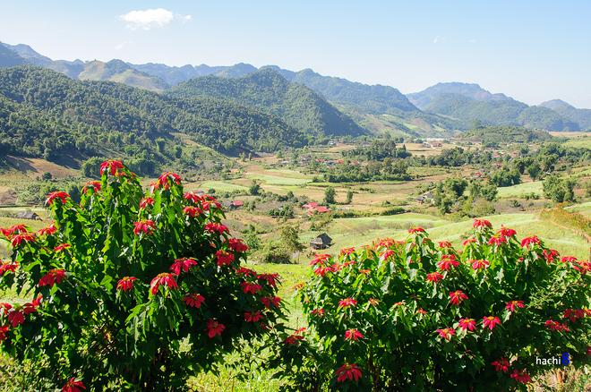 Điểm chụp hoa cải miễn phí ở Mộc Châu tháng 12