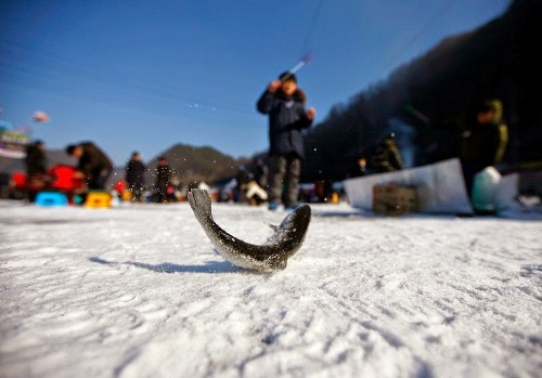 sancheoneo-ice-festival-9-6-5682-1421472