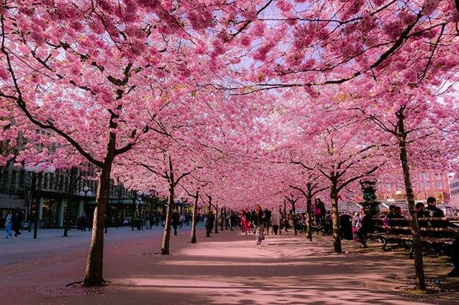 Những con đường hoa đẹp như tranh vẽ