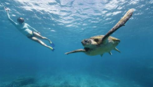 10 trải nghiệm kỳ thú ở Australia