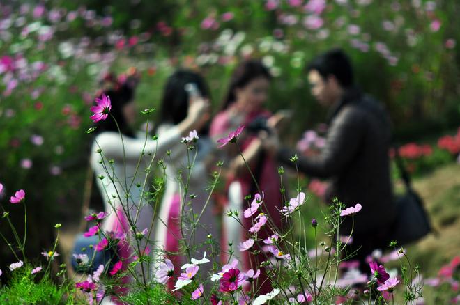 Xuân về trên làng hoa tết Nhật Tân