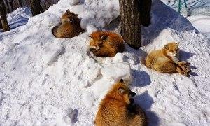 zao fox village japan 15 5902 1423280575 300x180 Khám phá những thiên đường mua sắm cuối năm tại Châu Á