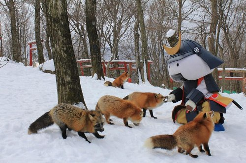 zao-fox-village-japan-32-5834-1423280572