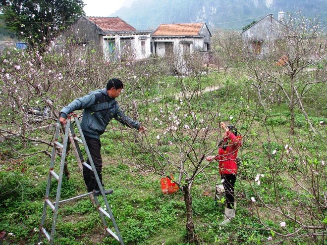 Vẻ đẹp hoa đào các vùng miền Việt Nam - ảnh 11