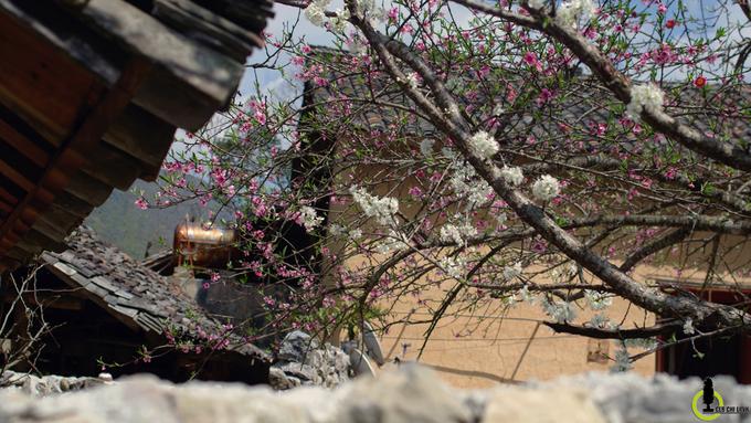 Hoa đào, hoa mận nở bung trên cao nguyên đá Hà Giang