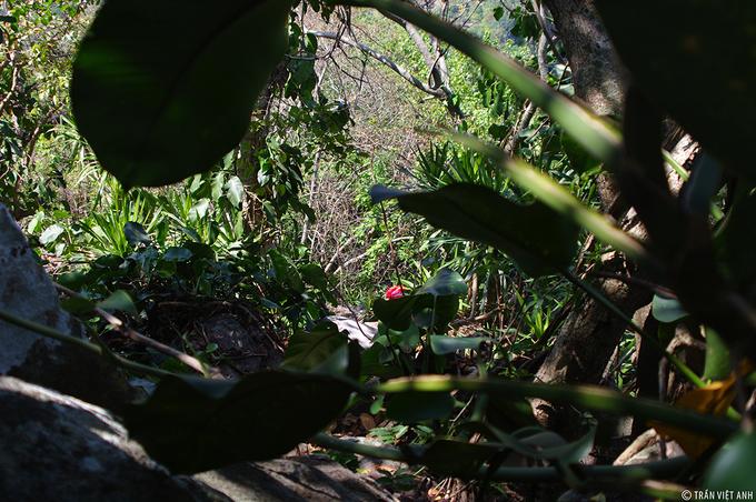 Băng rừng qua Ma Thiên Lãnh lên núi Bà Đen