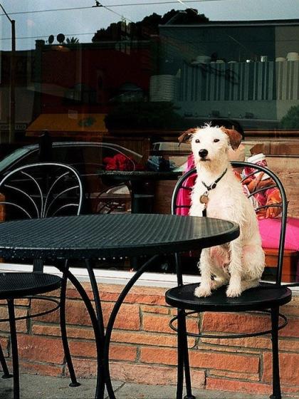 Decos Cafe Animal Cafes 6608 1426067813 Khám phá những thiên đường mua sắm cuối năm tại Châu Á