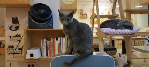 Feature Animal Cafes 620x282 5464 1426067811 Khám phá những thiên đường mua sắm cuối năm tại Châu Á