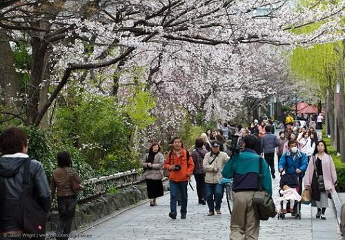 sakura-1-hanami-6599-1426654870.jpg