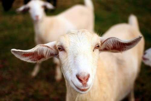 goat 7611 1428157819 Khám phá những thiên đường mua sắm cuối năm tại Châu Á